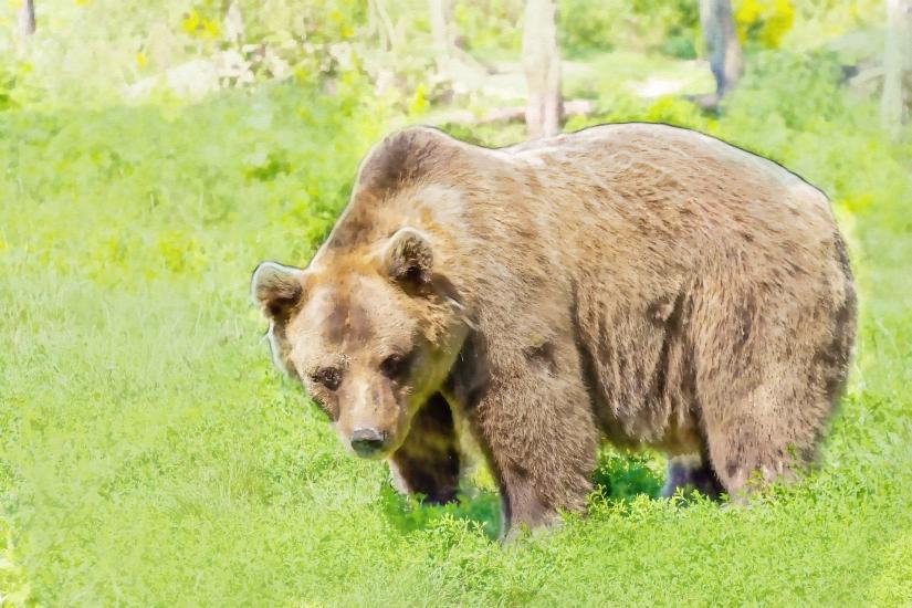edit bear-422682_1920