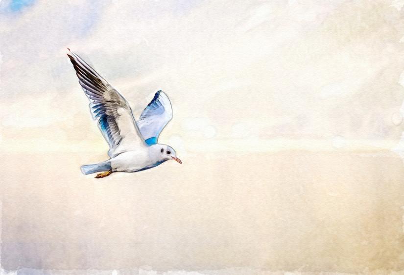 edit bird-3158784_1920
