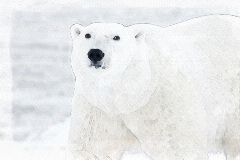 edit polar-bear-404314_1920