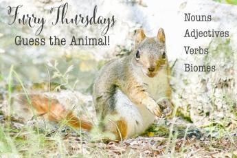 Furry Thursday chipmunk