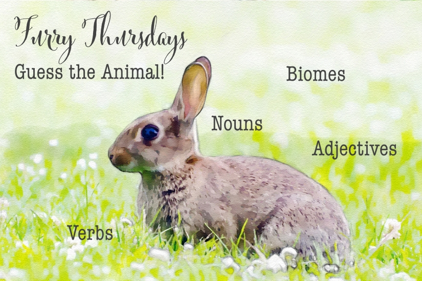 Furry Thursday rabbit