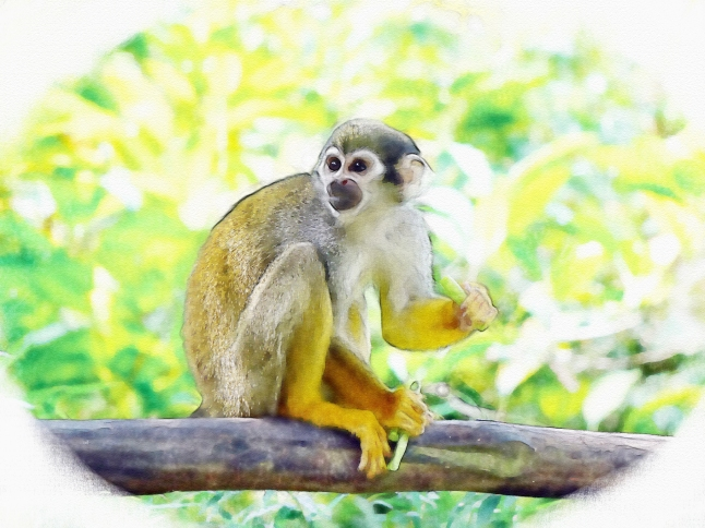 edit monkey squirrel-monkey-505191_1920