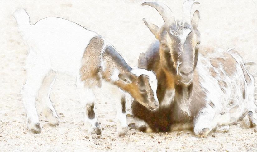 edit goats-3364434_1920