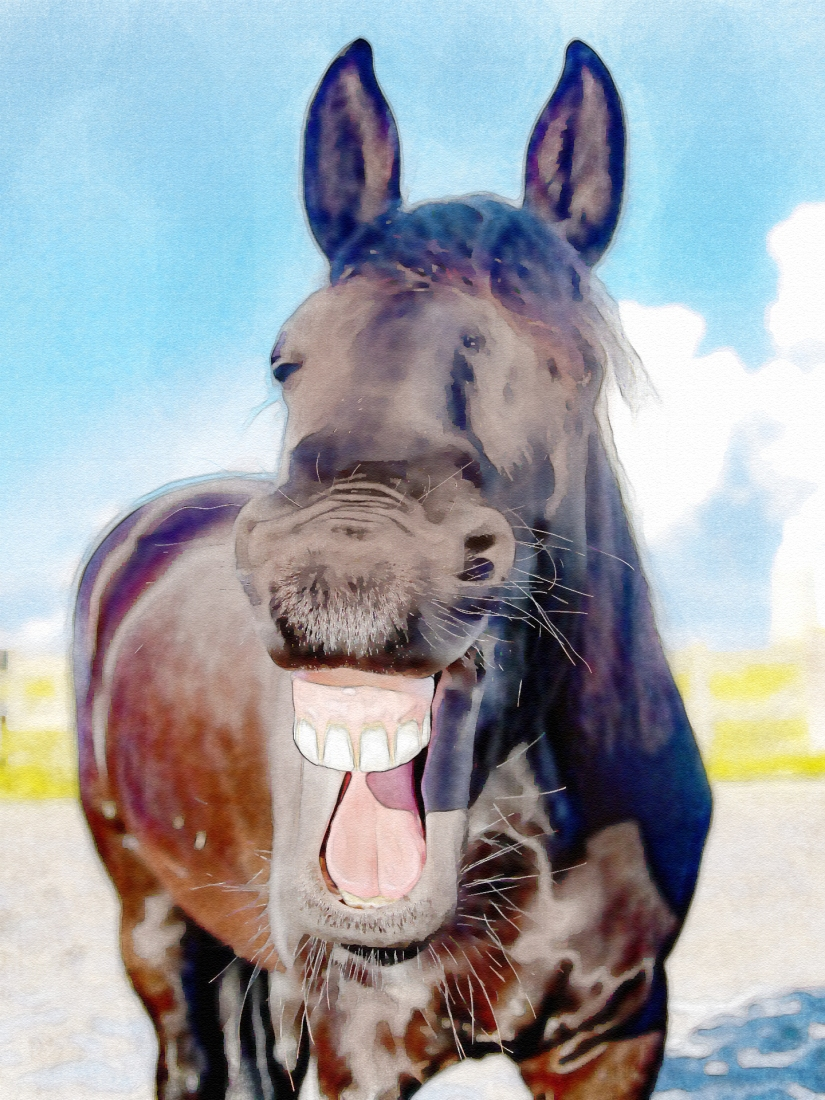 edit laughter horse-1844792_1920.jpg