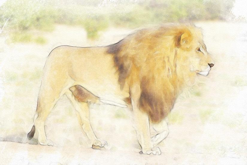 edit lion-805084_1920