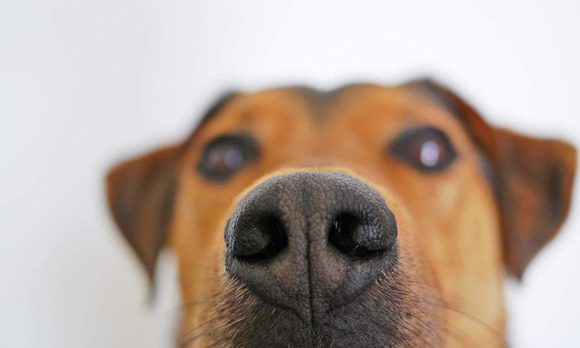smell dog-838242_1920